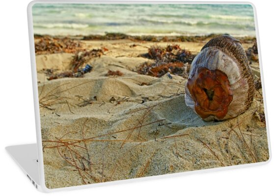 Dried coconut washed up on shore by Rashad Penn