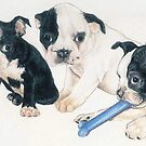 Boston Terrier Puppies by BarbBarcikKeith