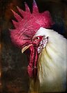 Finer Feathered Friend Rooster by alan shapiro