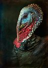 Finer Feathered Friends: Turkey by alan shapiro