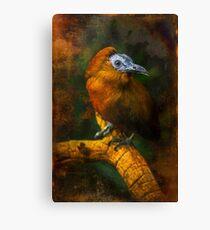 Finer Feathered Friends: Cappuchinbird Canvas Print