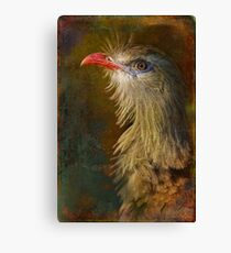 Finer Feathered Friends: Crested  Canvas Print