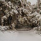 Virgin Snow In Swaledale by Sandra Cockayne