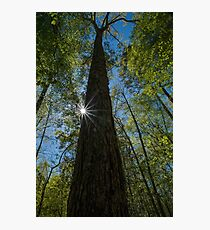 Sunstars in the Forest Photographic Print