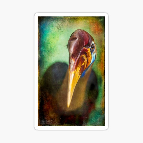 Finer Feathered Friends: Red knobbed Hornbill Sticker