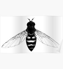 Flying Bee - insect illustration Poster