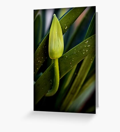 Just Waiting to Bloom Greeting Card
