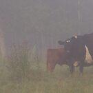 Foggy Morning Feed by Kathi Huff