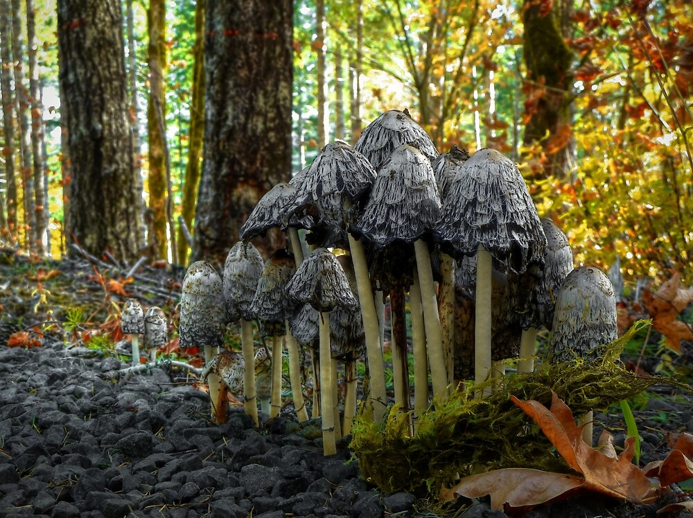 Stick Close ~ Shaggy Mane Mushroom ~ by Charles & Patricia   Harkins ~ Picture Oregon