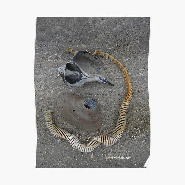 winter shells Poster