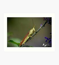 Grasshopper Portrait Art Print