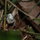 White crab spider by richeriley