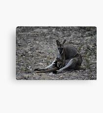 Wallaby & Joey Canvas Print