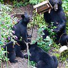 Bears in the Garden by patti4glory