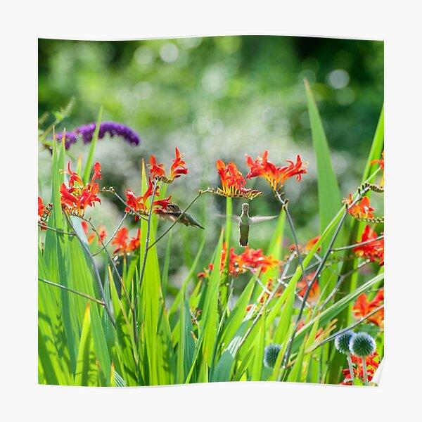 Hummingbirds in Summer Garden Poster