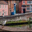 Seagull on the River Wall by Ruski