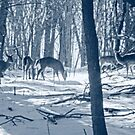 Deer In Forest by BonnieToll