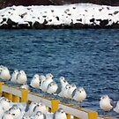 Gulls On Pier by BonnieToll