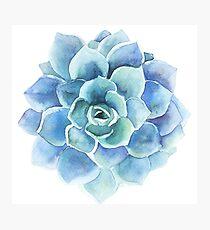 Lámina fotográfica Ilustración suculenta acuarela tonos azules