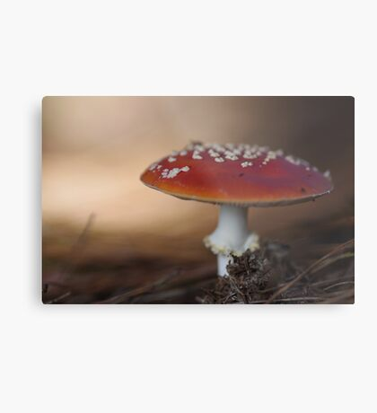 There is a fairy under the toadstool Metal Print