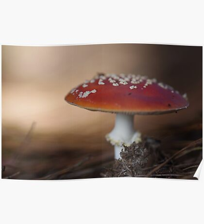 There is a fairy under the toadstool Poster