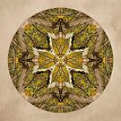 Into the Forest Mandala by Gail S. Haile