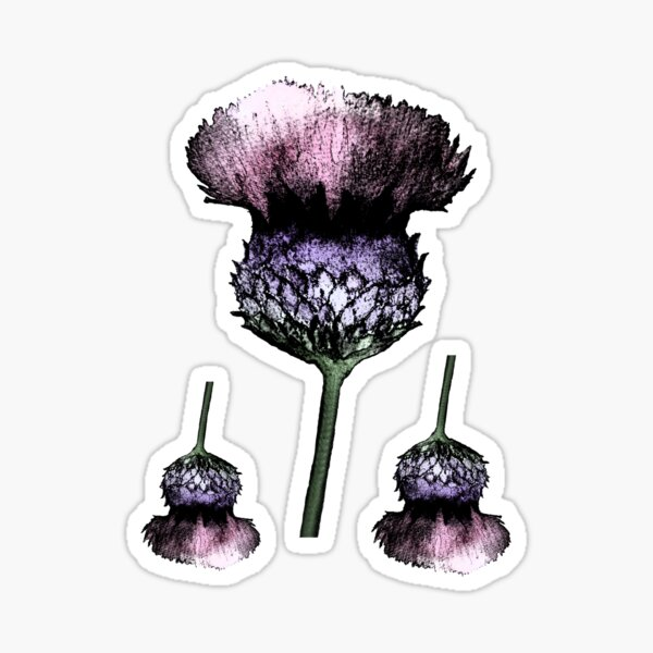 Thistle 1 Sticker