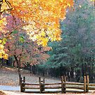 Country Scene In Autumn by RickDavis
