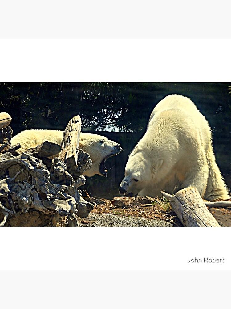 Bären.... von tortoisewerx