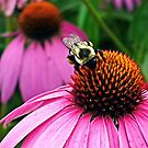 Bee On Cone Flower by BonnieToll