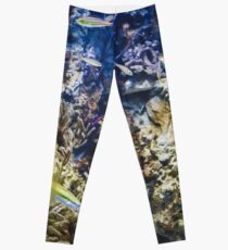 Under The Sea Fish Leggings