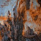 The Tree Bark Collection # 2 by Philip Johnson