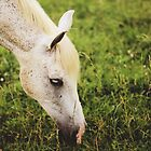 Gray Pony Grazing by Suzanne Charette