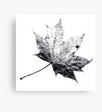 Scanned Leaf Canvas Print