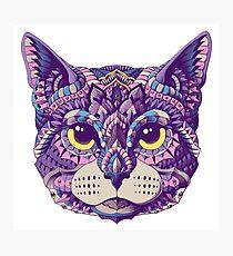 Lámina fotográfica Cabeza de gato (Versión en color)