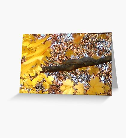 Become the Branch... Greeting Card