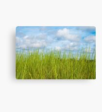 Grass and cloudy sky Canvas Print