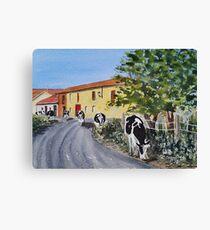 Cows on the Camino de Santiago Canvas Print
