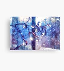 Crystal water drops on a branch Canvas Print