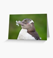 Feathered - Yellow-Eyed Penguin Greeting Card