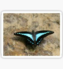 Blue Triangle Butterfly (Graphium sarpedon choredon) Sticker