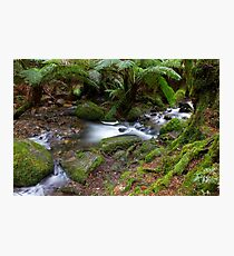 Banks of the river Photographic Print