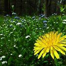 Wild Garden by BonnieToll