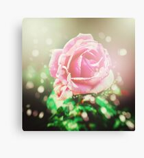 Nature background with rose flower Canvas Print