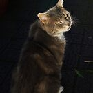 Tabby cat with dark background by turniptowers