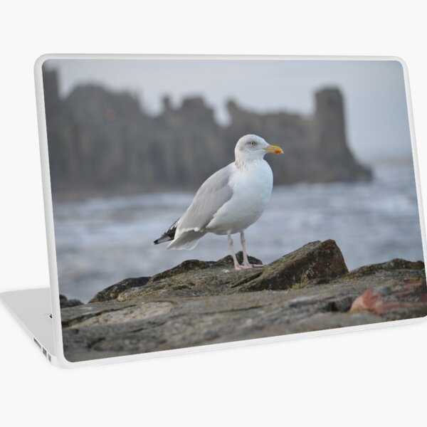 Seagull in Front of St Andrews Castle Laptop Skin