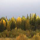 Autumn Light by Kathi Huff