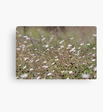 Meadow Blossoms Canvas Print