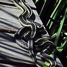 Garter Snakes by BonnieToll