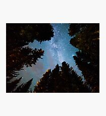 Forest and Stars Photographic Print